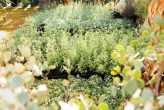 plantseum_002