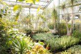 plantseum_003