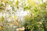 plantseum_004