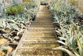 plantseum_005