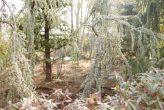 plantseum_006