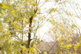 plantseum_010