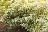 plantseum_013