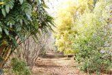 plantseum_017