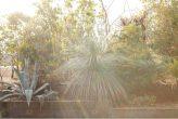 plantseum_019