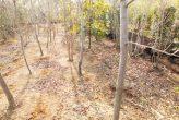 plantseum_022