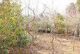 plantseum_024
