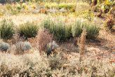 plantseum_026